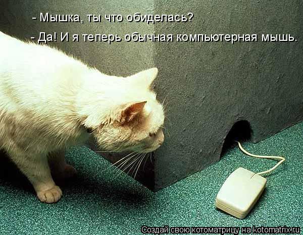 Котоматрица: - Мышка, ты что обиделась? - Да! И я теперь обычная компьютерная мышь.