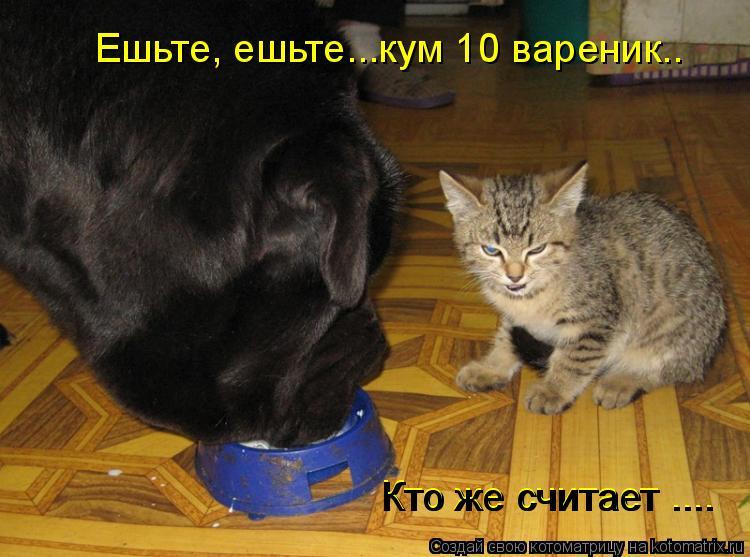 Котоматрица: Ешьте, ешьте...кум 10 вареник.. Кто же считает .... Кто же считает ....