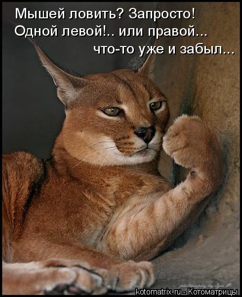Котоматрица: Мышей ловить? Запросто! Одной левой!.. или правой... что-то уже и забыл...