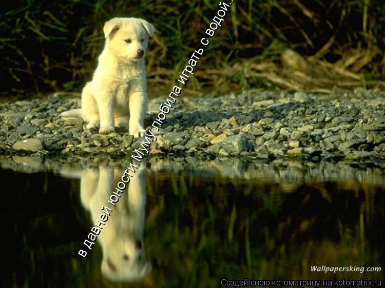 Котоматрица: в давней юности Муму любила играть с водой...
