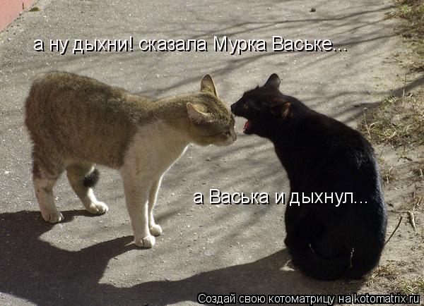 Котоматрица: а ну дыхни! сказала Мурка Ваське... а Васька и дыхнул...
