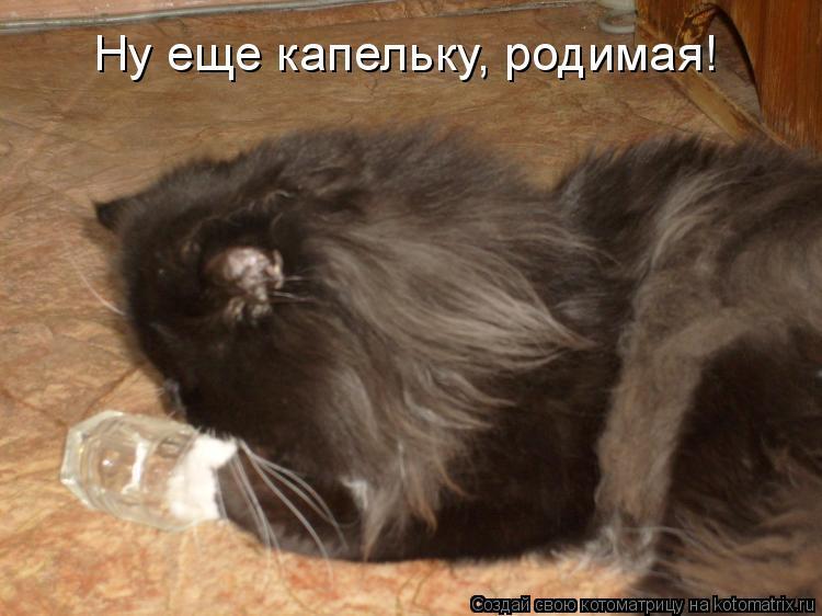 http://kotomatrix.ru/images/lolz/2009/11/12/403585.jpg
