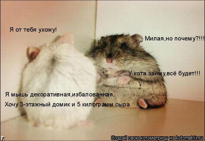 Котоматрица: Я от тебя ухожу! Я мышь декоративная,избалованная. Хочу 3-этажный домик и 5 килограмм сыра Милая,но почему?!!! У кота займу,всё будет!!!