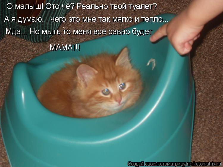 Котоматрица: А я думаю... чего это мне так мягко и тепло... Э малыш! Это чё? Реально твой туалет? Мда... Но мыть то меня всё равно будет МАМА!!!