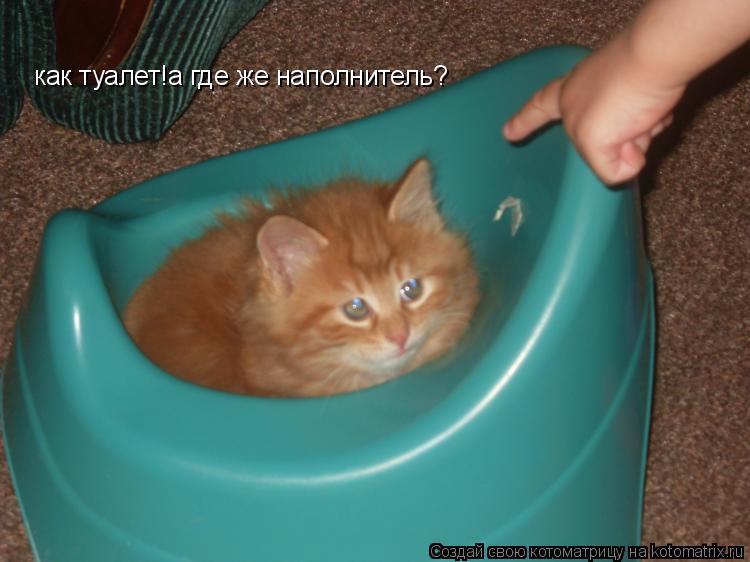 Котоматрица: как туалет!а где же наполнитель?