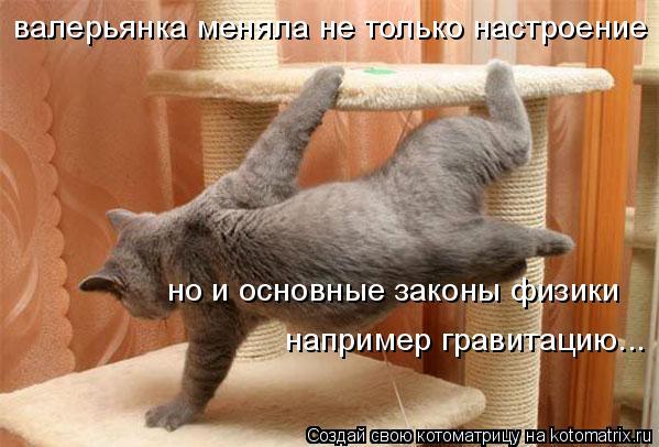 Котоматрица: валерьянка меняла не только настроение но и основные законы физики например гравитацию...