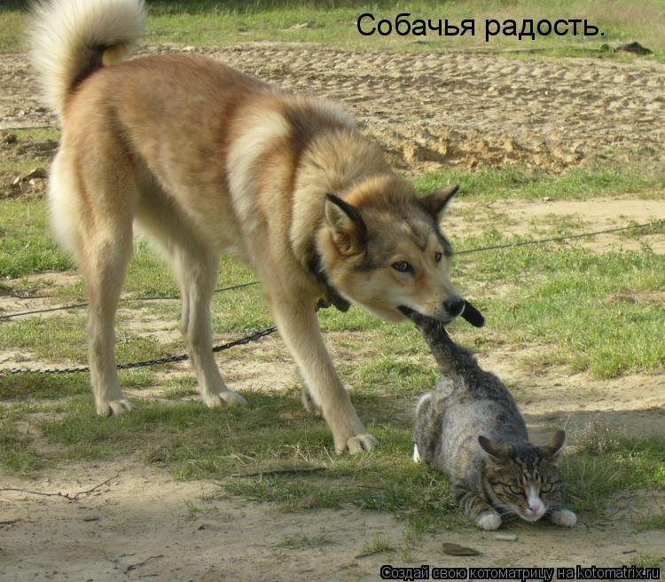 Котоматрица: Собачья радость.