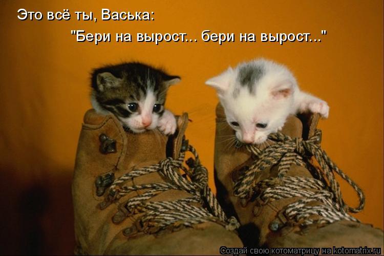"""Котоматрица: """"Бери на вырост... бери на вырост..."""" Это всё ты, Васька:"""
