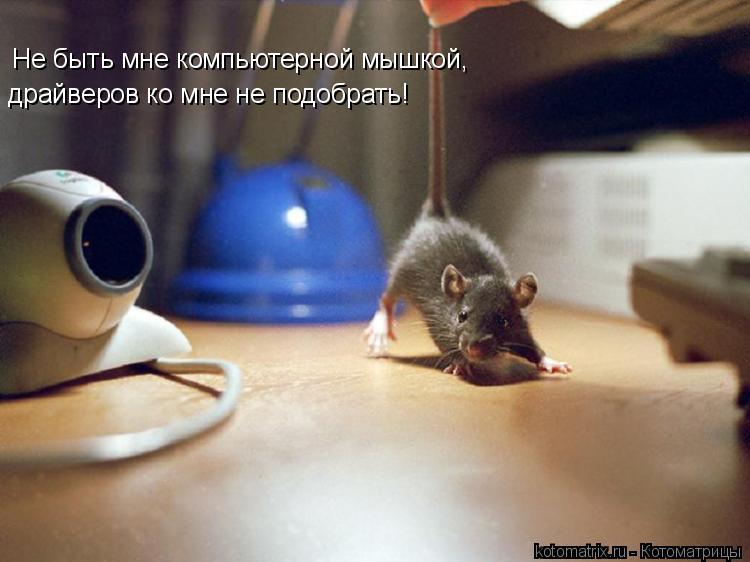 Котоматрица: Не быть мне компьютерной мышкой, драйверов ко мне не подобрать!