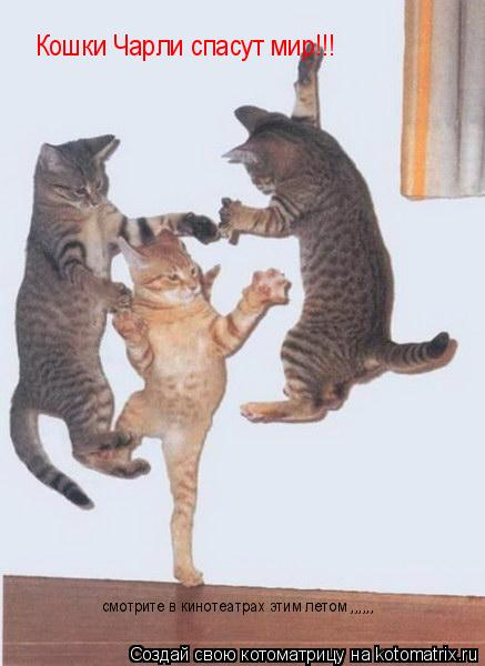 Котоматрица: Кошки Чарли спасут мир!!! смотрите в кинотеатрах этим летом ,,,,,,