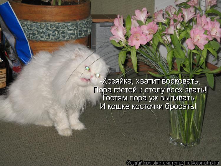 Котоматрица: -Хозяйка, хватит ворковать, Пора гостей к столу всех звать! Гостям пора уж выпивать И кошке косточки бросать!