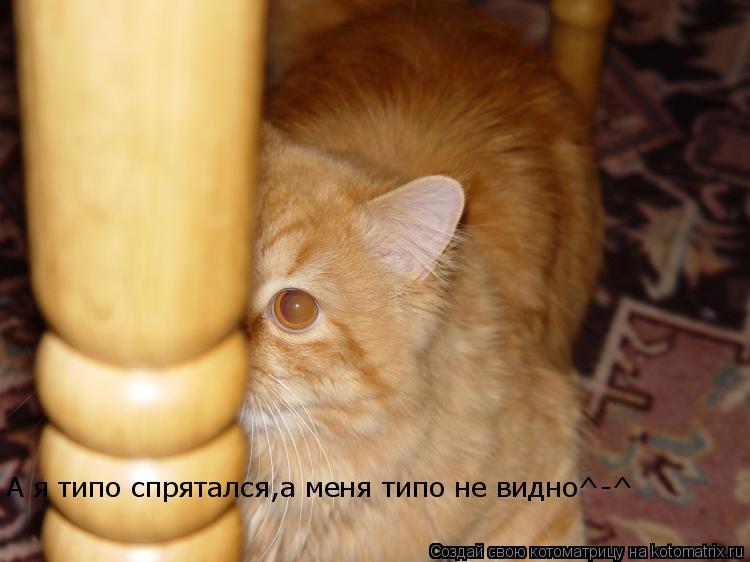 Котоматрица: А я типо спрятался,а меня типо не видно^-^