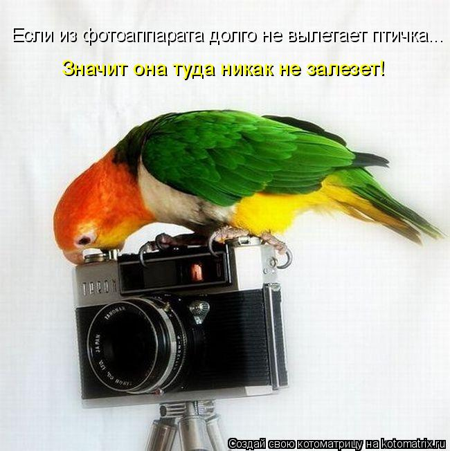 Котоматрица: Если из фотоаппарата долго не вылетает птичка... Значит она туда никак не залезет!