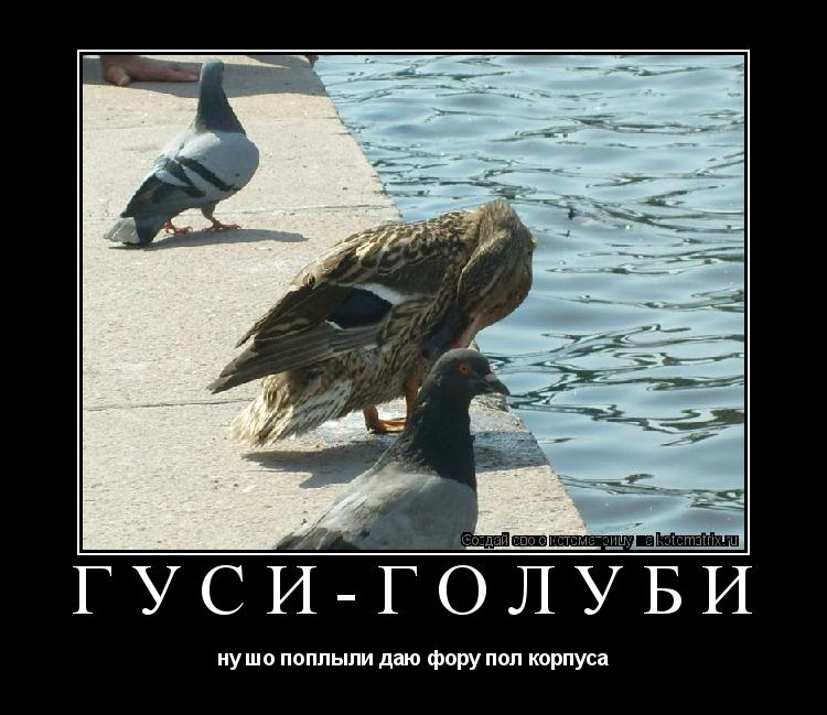 Котоматрица: гуси-голуби ну шо поплыли даю фору пол корпуса
