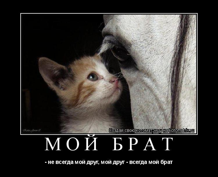 Котоматрица: мой брат - не всегда мой друг, мой друг - всегда мой брат