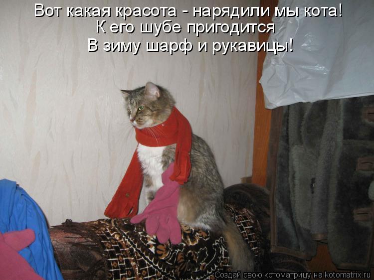 Котоматрица: Вот какая красота - нарядили мы кота! К его шубе пригодится  В зиму шарф и рукавицы!