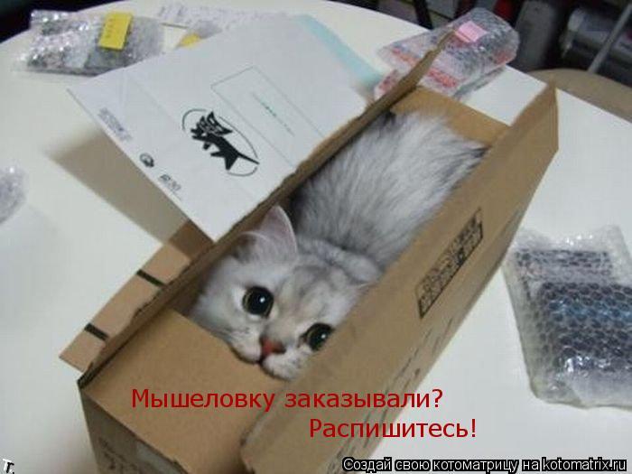Котоматрица: Мышеловку заказывали?  Распишитесь!
