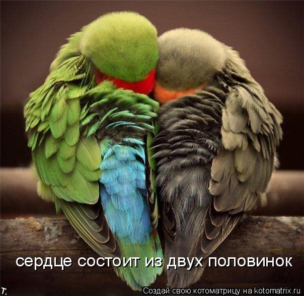Котоматрица: сердце состоит из двух половинок