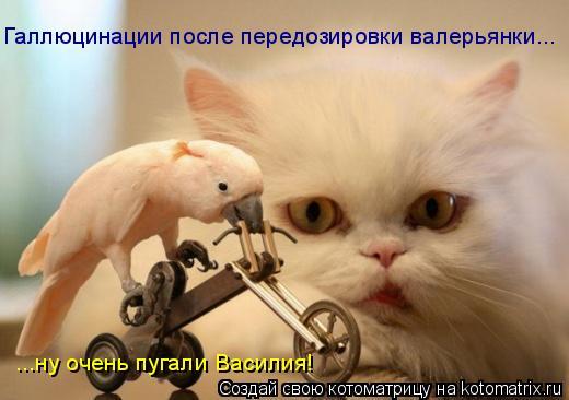 Котоматрица: Галлюцинации после передозировки валерьянки... ...ну очень пугали Василия!