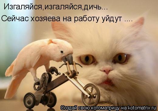 Котоматрица: Изгаляйся,изгаляйся,дичь...  Сейчас хозяева на работу уйдут ....