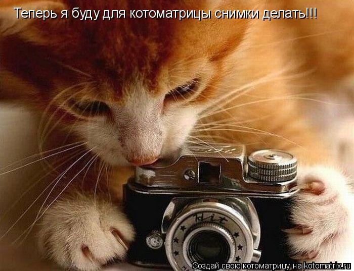 Котоматрица: Теперь я буду для котоматрицы снимки делать!!!