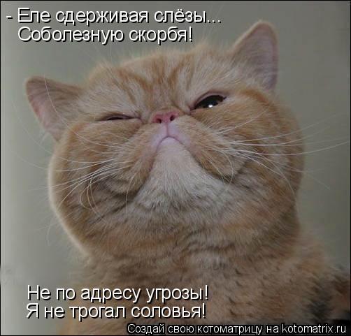 Котоматрица: - Еле сдерживая слёзы... Не по адресу угрозы! Я не трогал соловья! Соболезную скорбя!