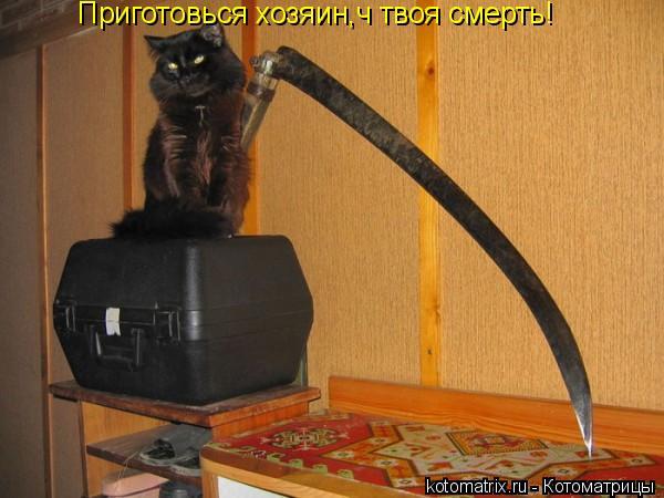 Котоматрица: Приготовься хозяин,ч твоя смерть!