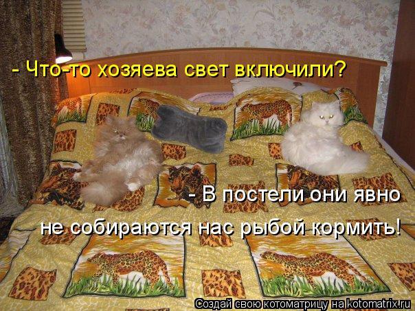 Котоматрица: - Что-то хозяева свет включили? - В постели они явно  не собираются нас рыбой кормить!