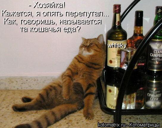 Котоматрица: - Хозяйка! Кажется, я опять перепутал... Как, говоришь, называется та кошачья еда? whisky