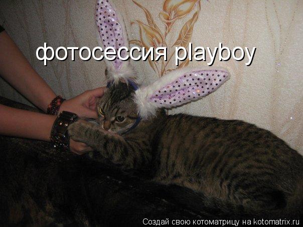 Котоматрица: фотосессия playboy