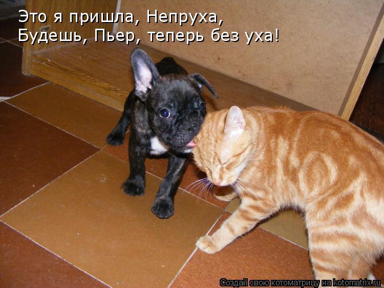 Котоматрица: Это я пришла, Непруха,  Будешь, Пьер, теперь без уха!