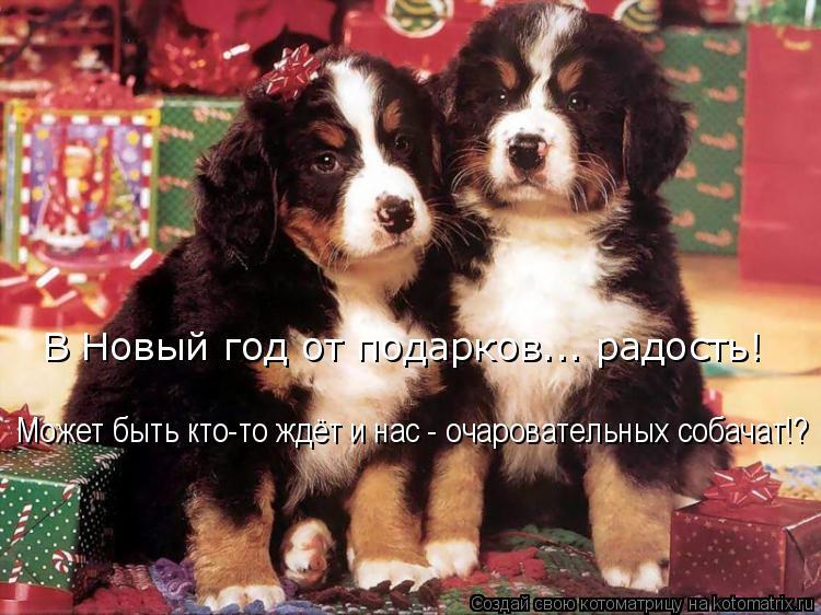 Котоматрица: Может быть кто-то ждёт и нас - очаровательных собачат!? В Новый год от подарков... радость!