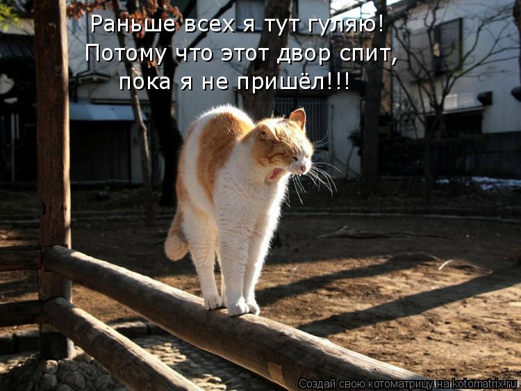 Котоматрица: Раньше всех я тут гуляю! Потому что этот двор спит,  пока я не пришёл!!!