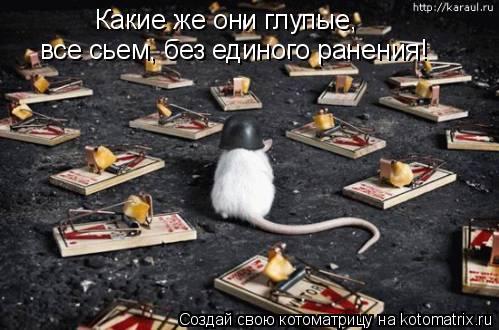 Котоматрица: Какие же они глупые, все сьем, без единого ранения!