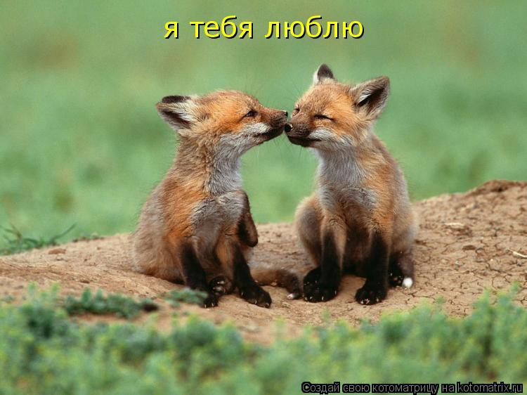 Котоматрица: я тебя люблю