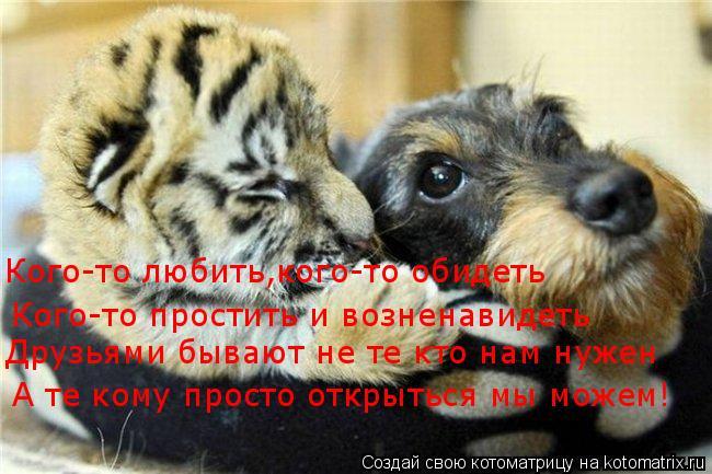 Котоматрица: Кого-то любить,кого-то обидеть Кого-то простить и возненавидеть Друзьями бывают не те кто нам нужен А те кому просто открыться мы можем!