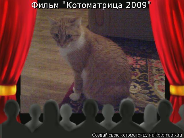 "Котоматрица: Фильм ""Котоматрица 2009"""