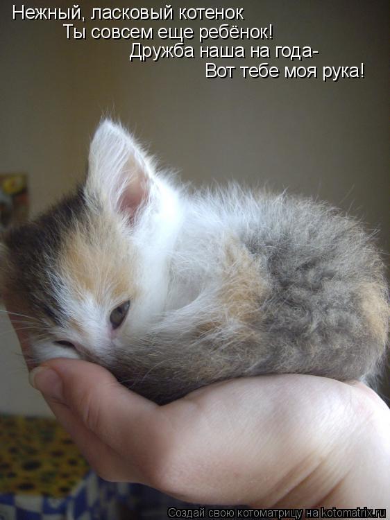 Котоматрица: Нежный, ласковый котенок Ты совсем еще ребёнок! Дружба наша на года- Вот тебе моя рука!