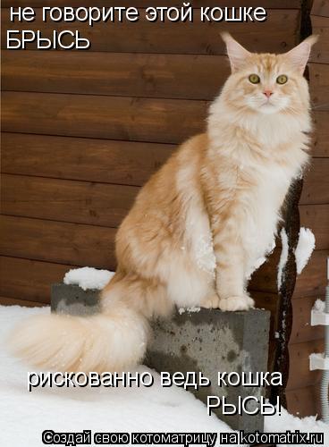 Котоматрица: не говорите этой кошке БРЫСЬ рискованно ведь кошка РЫСЬ!