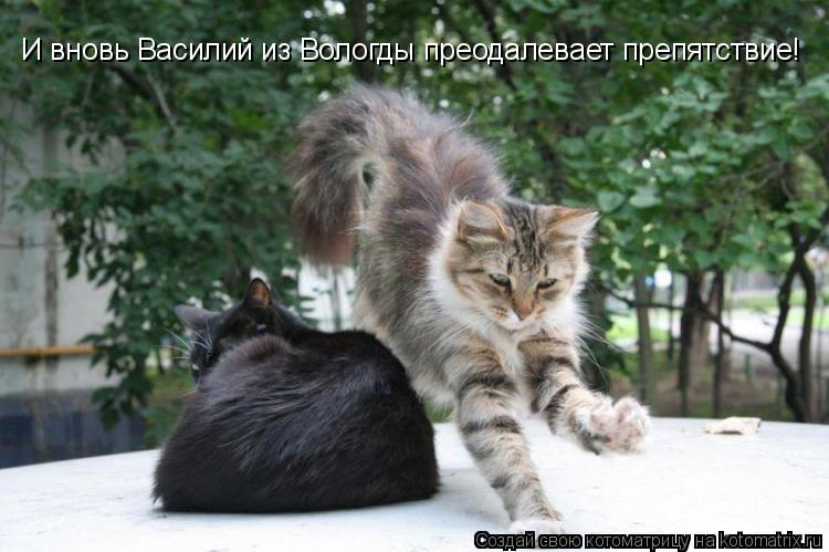 Котоматрица: И вновь Василий из Вологды преодалевает препятствие!