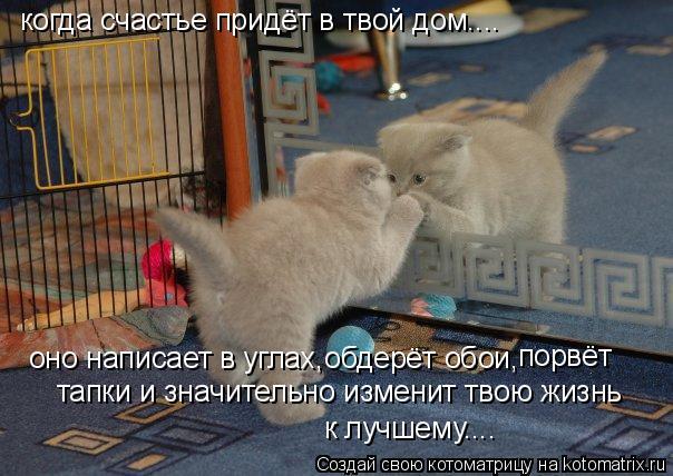 Котоматрица: когда счастье придёт в твой дом.... оно написает в углах,обдерёт обои, порвёт  тапки и значительно изменит твою жизнь к лучшему....