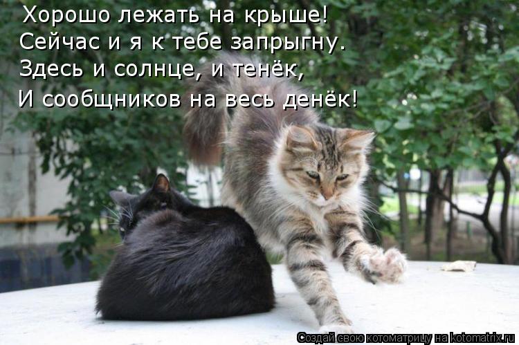 Котоматрица: Хорошо лежать на крыше! Сейчас и я к тебе запрыгну. Здесь и солнце, и тенёк,  И сообщников на весь денёк!