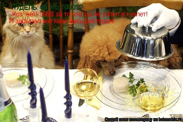 Котоматрица: ПУДЕЛЬ: За это 1000$? Кот: нет! 999$ за то что ты не успел в туалет! И засыпал метками весь ресторан!