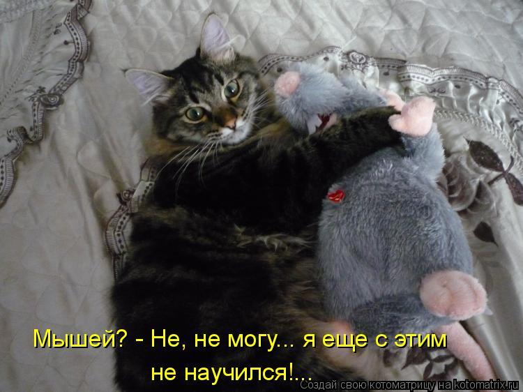 Котоматрица: Мышей? - Не, не могу... я еще с этим не научился!...