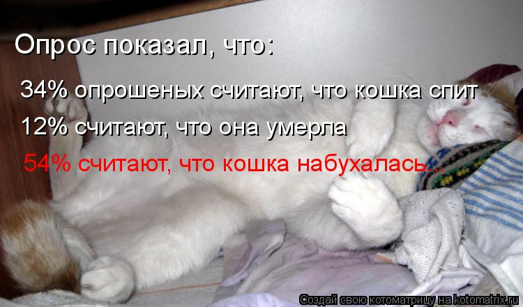 Котоматрица: Опрос показал, что: 34% опрошеных считают, что кошка спит 12% считают, что она умерла 54% считают, что кошка набухалась...
