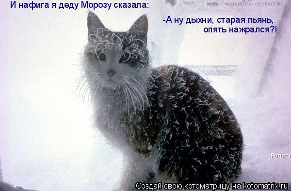 Котоматрица: И нафига я деду Морозу сказала: -А ну дыхни, старая пьянь,   опять нажрался?!