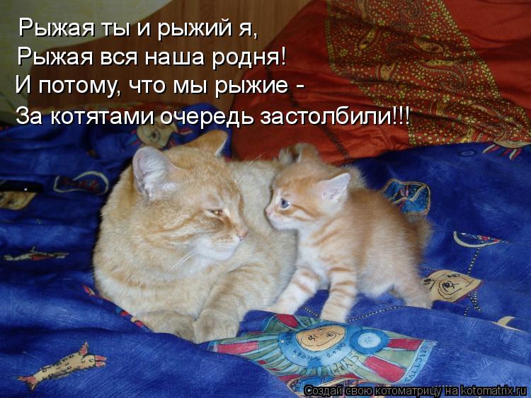 Котоматрица: Рыжая ты и рыжий я, Рыжая вся наша родня! И потому, что мы рыжие - За котятами очередь застолбили!!!