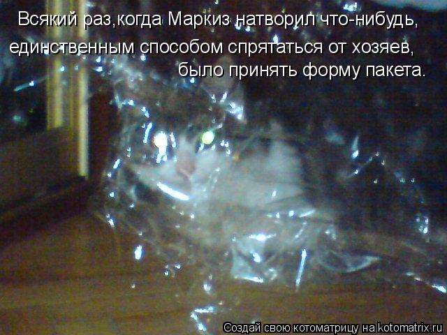 Котоматрица: Всякий раз,когда Маркиз натворил что-нибудь, единственным способом спрятаться от хозяев, было принять форму пакета.
