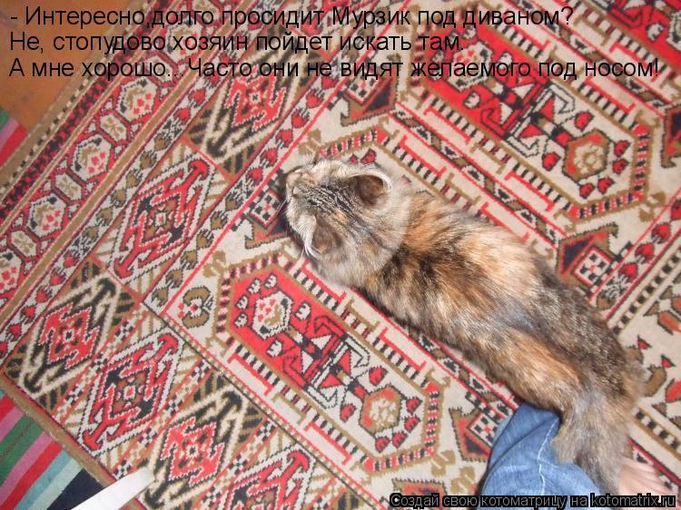 Котоматрица: - Интересно,долго просидит Мурзик под диваном? Не, стопудово хозяин пойдет искать там. А мне хорошо... Часто они не видят желаемого под носом!