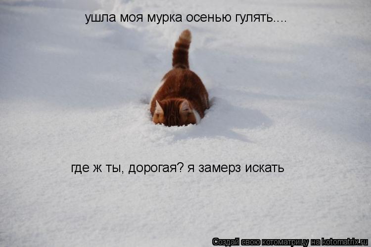 Котоматрица: ушла моя мурка осенью гулять.... где ж ты, дорогая? я замерз искать